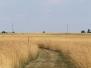 The Mine Creek Battlefield - 2012
